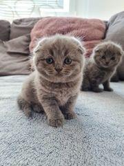 Süße kleine kitten