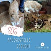 SOS - Dringend Pflegestelle für Katzenpaar