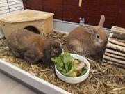 Kaninchen in liebevolle Hände abzugeben