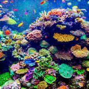 Meerwasser Korallen Wathsapp