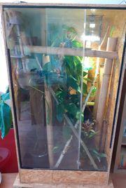 Madagaskar Taggecko Zuchtgruppe High Red