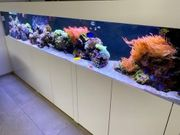 Meerwasser Aquarium KOMPLETT 300x50x50cm TOP