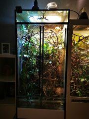 Terrarium Glas 60bx60tx130h