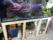Meerwasser Aquarium Inhalt