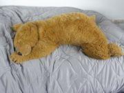 Schöner großer brauner Bär aus
