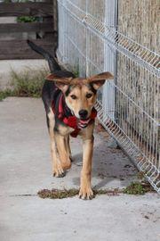 Tierschutzhündin sucht Familienanschluss