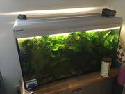 Aquarium 100cm 40cm x 50