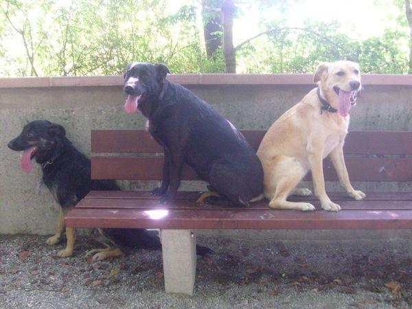 Hundebetreuung mit Herz und Verstand