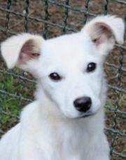 Narciso - Labrador Mix 6 Monate