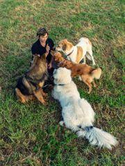 Hundepension für die Herbstferien - Spontan