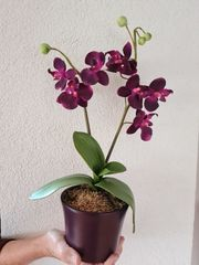 Orchidee aus Kunststoff