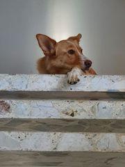 Notfall Max für hundeerfahrene Leute