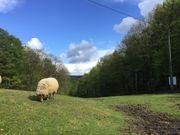 Ferien im Westerwald