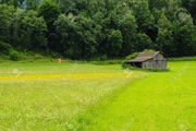 Suche Grundstück Wiese Wald etc