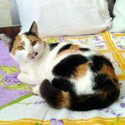 Katze Tiffany träumt von ihrem