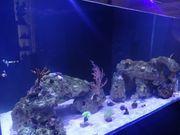 Suche Besatz für mein Aquarium