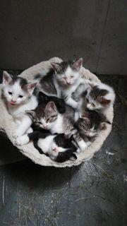 Schöne Kitten suchen neues zuhause
