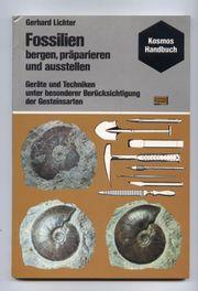 Fossilien - bergen präparieren und ausstellen