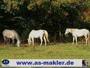 Tierklinik Bauernhaus als Groß- und