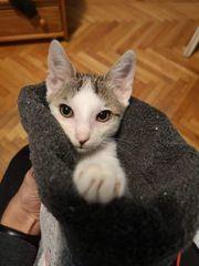 Katzenbub Leon sucht ein Zuhause