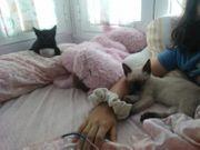 Katzenkinder Amedio Charlotte ALO