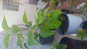 Konvolut Pflanzenableger