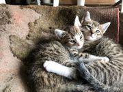 2 Katzen Babys