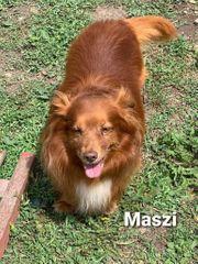 Der wundervolle Hundeopa Maszi sucht