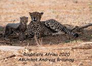Fotokalender 2020 Raubtiere Afrika