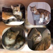 Wunderschöne Katze Kitty 4 Jahre