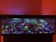 Meerwasseraquarium 1000 Liter