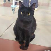 kasja behindertes Katzenmädchen katze 7