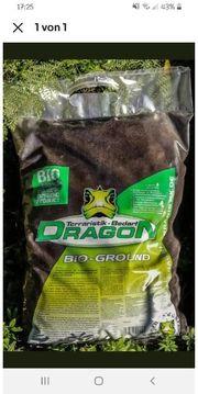 dragon Terrarien Erde