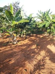 Brasilien 52 Ha grosses Bauerngut
