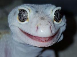 Reptilien, Terraristik - Hilfe Gruppe Plauder Gruppe für