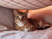 Katze Natasha sucht ein neues
