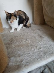 Hauskatze 1 Jahr alt