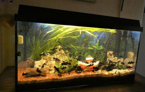 Aquarium komplett mit Fische