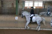 Reitbeteiligung Reiter sucht Pferd
