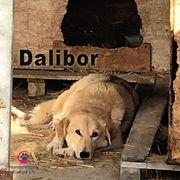 Dalibor ein Leben an der