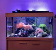 Meerwasseraquarium 250l