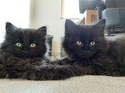 Katze Kätzchen Babykatze