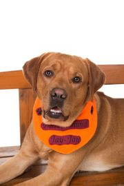 Labrador Retriever Deckrüde kein Verkauf