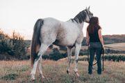 Pferdegestütztes Coaching - Einzelcoaching