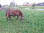 liebe PonyStute