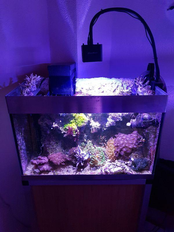 72 Liter Meerwasser Aquarium mit