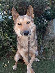 Wolfi - auch Handicap Hunde können