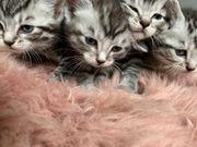 Süße Kitten in liebevolle Hände