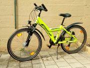 Fahrrad Pegasus Avanti Sport