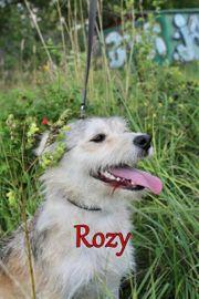 Kinderfreundliche Mischlingshündin Rozy